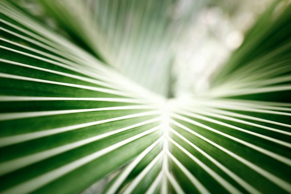 Tile image for Virtual Worship – Palm Sunday
