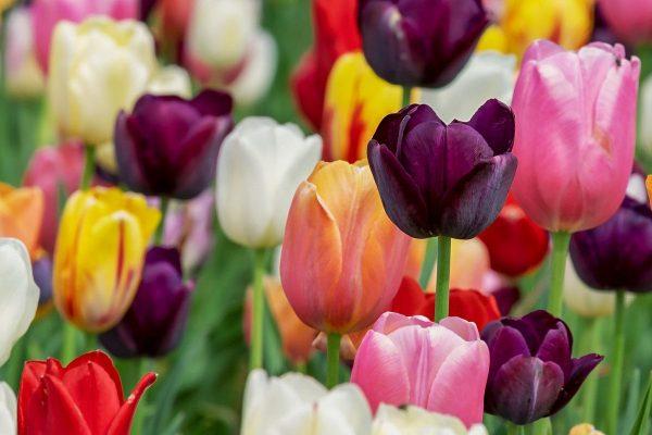 Tile image for Celebrate Spring