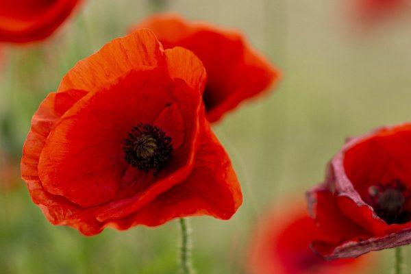 Tile image for ANZAC Sacrifice